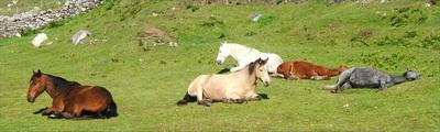 Horses chilling out at Macalla farm